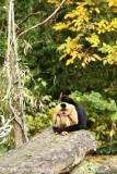 Zoo_Hannover_301015_IMG_0635