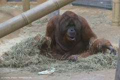 Zoo_Hannover_301015_IMG_0638