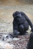 Zoo_Hannover_301015_IMG_0717