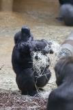 Zoo_Hannover_301015_IMG_0726