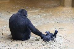 Zoo_Hannover_301015_IMG_0744