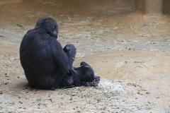 Zoo_Hannover_301015_IMG_0748