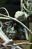 Zoo_Hannover_301015_IMG_0832