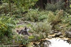 Zoo_Hannover_301015_IMG_0844_1273