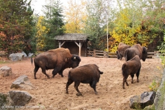 Zoo_Hannover_301015_IMG_0872_1283