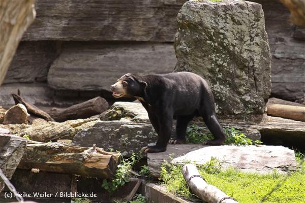 Zoo Koeln 230710- IMG_7966