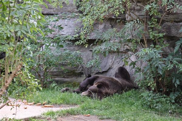 Zoo Koeln 230710- IMG_8005