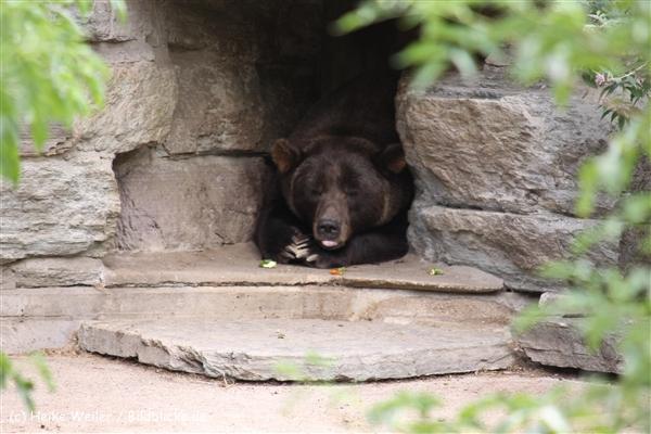 Zoo Koeln 230710- IMG_8021