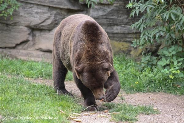 Zoo Koeln 230710- IMG_8031