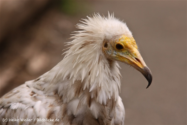 Zoo Koeln 230710- IMG_8151