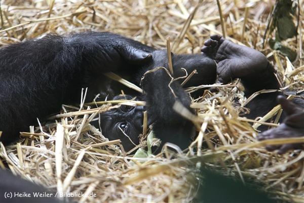 Zoo Koeln 230710- IMG_8260