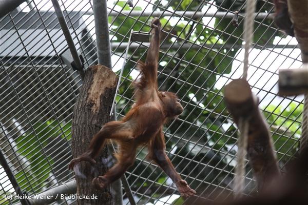 Zoo Koeln 230710- IMG_8294