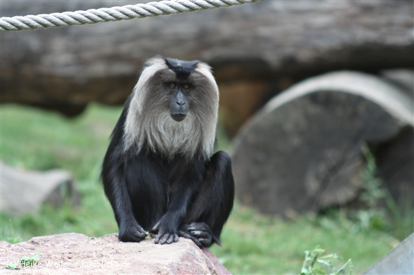Zoo Koeln 230710- IMG_8335