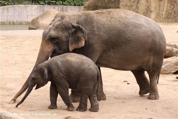 Zoo Koeln 230710- IMG_8385