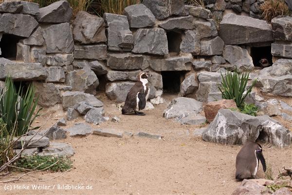 Zoo Koeln 230710- IMG_8479