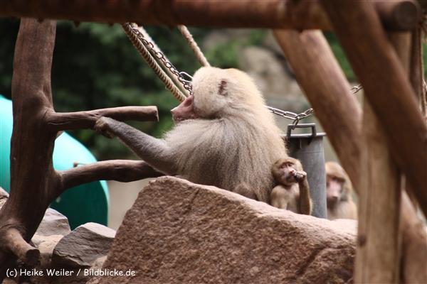 Zoo Koeln 230710- IMG_8547