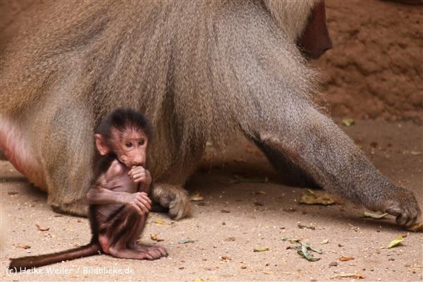 Zoo Koeln 230710- IMG_8565