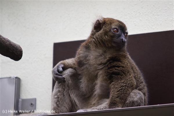 Zoo Koeln 230710- IMG_8609