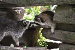 Zoo Koeln 230710- IMG_7954