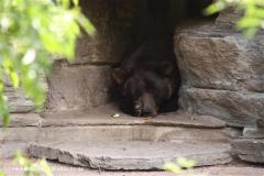Zoo Koeln 230710- IMG_7994