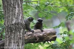 Zoo Koeln 230710- IMG_8080