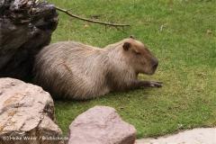 Zoo Koeln 230710- IMG_8087