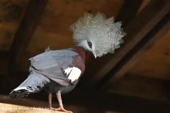 Zoo Koeln 230710- IMG_8163