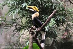 Zoo Koeln 230710- IMG_8169