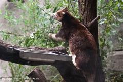 Zoo Koeln 230710- IMG_8201