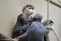 Zoo Koeln 230710- IMG_8237