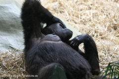 Zoo Koeln 230710- IMG_8246