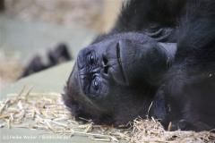 Zoo Koeln 230710- IMG_8279