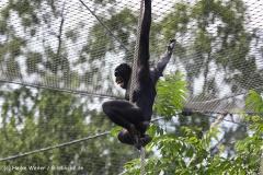 Zoo Koeln 230710- IMG_8310