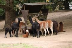 Zoo Koeln 230710- IMG_8350