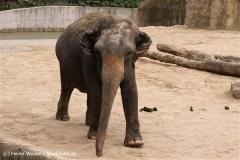 Zoo Koeln 230710- IMG_8356