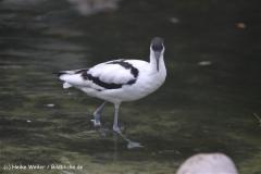 Zoo Koeln 230710- IMG_8408