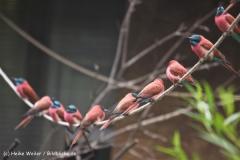 Zoo Koeln 230710- IMG_8431