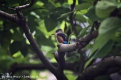 Zoo Koeln 230710- IMG_8445
