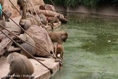 Zoo Koeln 230710- IMG_8553