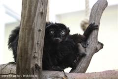 Zoo Koeln 230710- IMG_8619