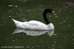 Zoo Koeln 230710- IMG_8631
