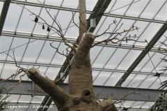 Zoo Koeln 230710- IMG_8637_1459