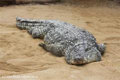 Zoo Koeln 230710- IMG_8672