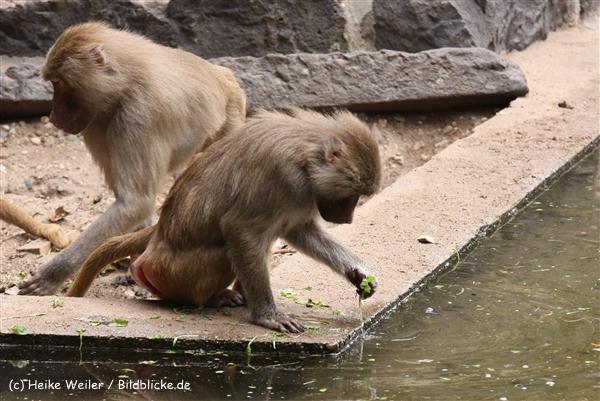 Zoo Krefeld 240710- IMG_8696