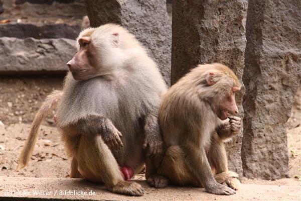 Zoo Krefeld 240710- IMG_8698