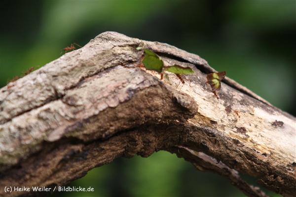 Zoo Krefeld 240710- IMG_8727