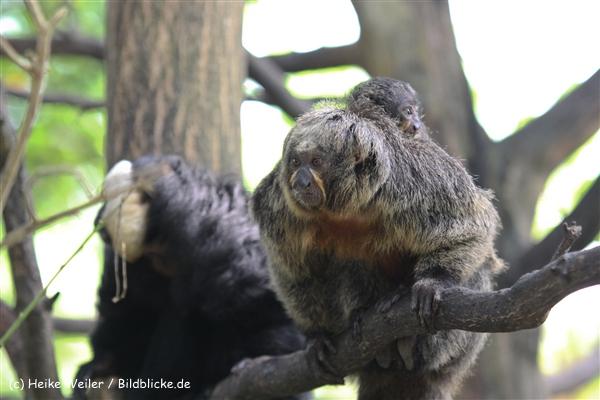 Zoo Krefeld 240710- IMG_8762
