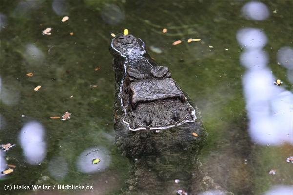 Zoo Krefeld 240710- IMG_8784