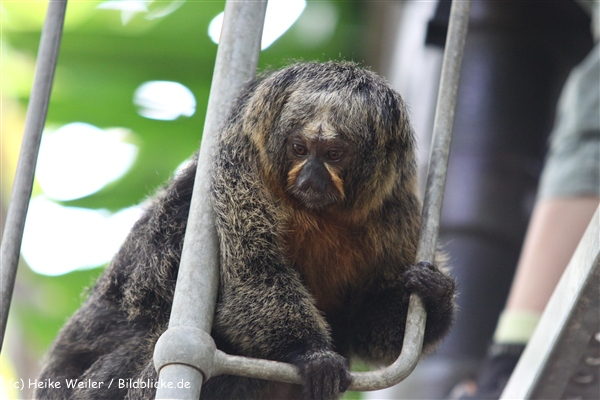 Zoo Krefeld 240710- IMG_8792
