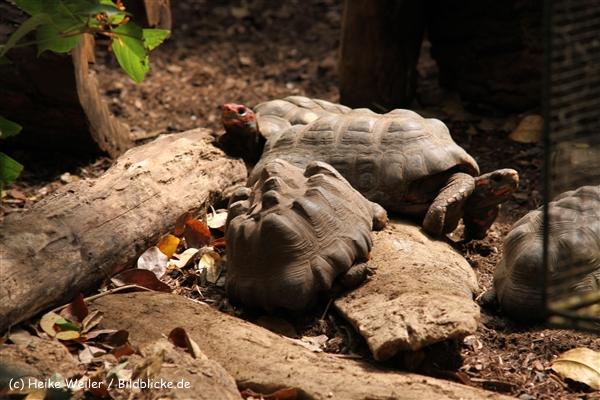 Zoo Krefeld 240710- IMG_8802